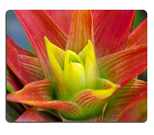 Luxlady Gaming Mousepad IMAGE ID: 27391301 Mooie rode lommerrijke bromelia plant