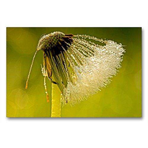 Premium Textil-Leinwand 90 x 60 cm Quer-Format Pusteblume im Frühtau | Wandbild, HD-Bild auf Keilrahmen, Fertigbild auf hochwertigem Vlies, Leinwanddruck von Thomas Herzog
