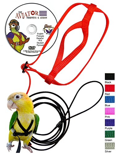 The AVIATOR Pet Bird Harness and Leash: Large Blue