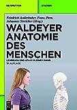 Waldeyer - Anatomie des Menschen: Lehrbuch und Atlas in einem Band (De Gruyter Studium) - Friedrich Anderhuber