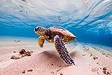 Schildkröte Meer Unterwasser Sand XXL Wandbild Kunstdruck