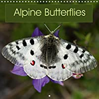 Alpine Butterflies (Wall Calendar 2021 300 × 300 mm Square): A calendar featuring stunning photos of some of the beautiful butterflies that can be found in the Alps (Monthly calendar, 14 pages )