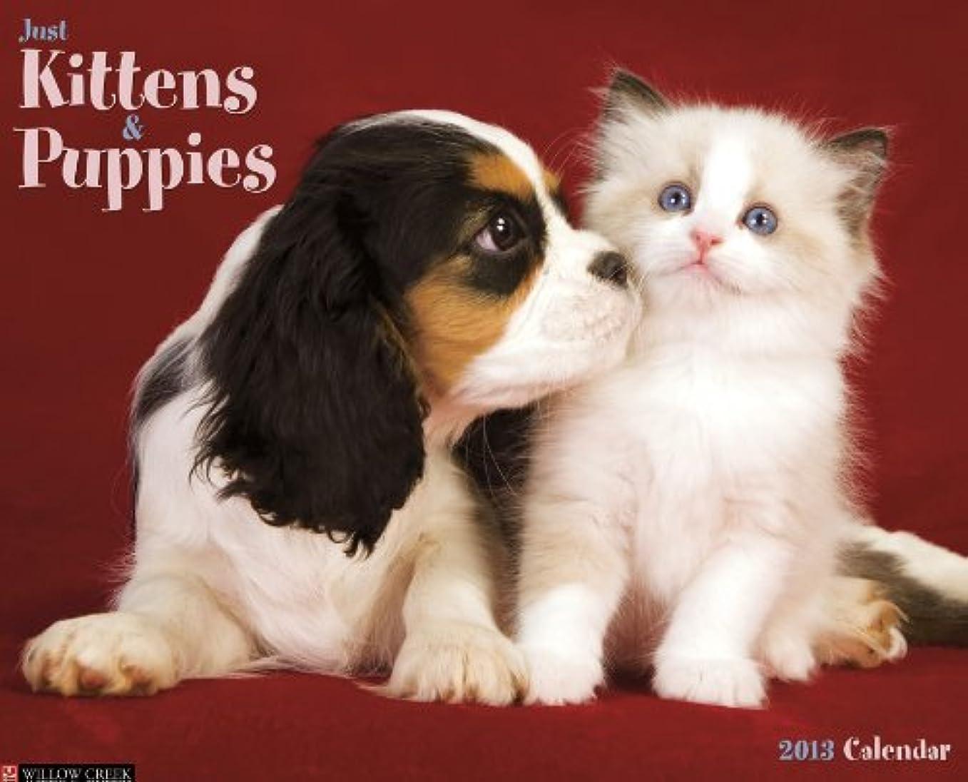 ビザ無謀表面Kittens & Puppies 2013 Wall Calendar