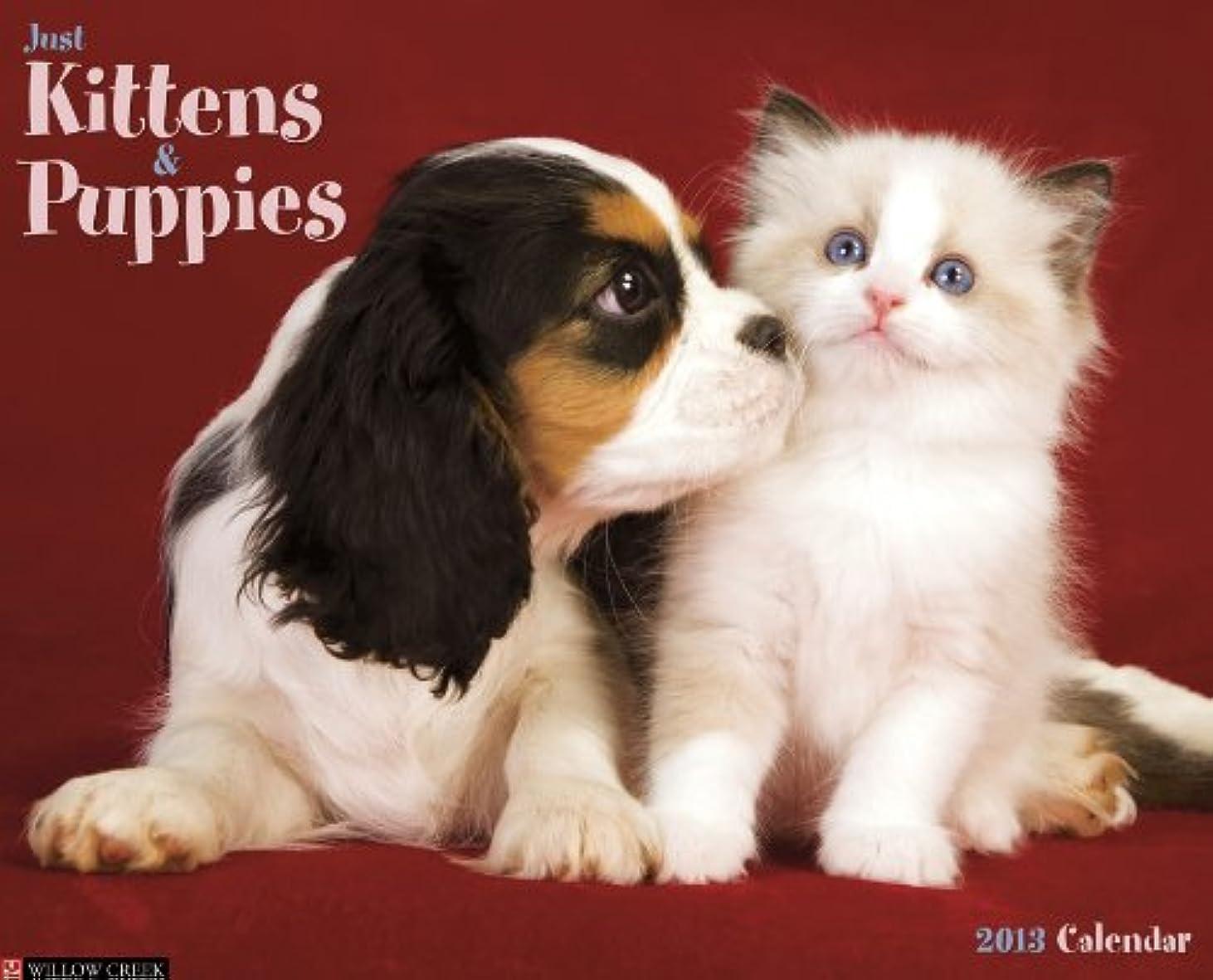 収縮以前はそこKittens & Puppies 2013 Wall Calendar