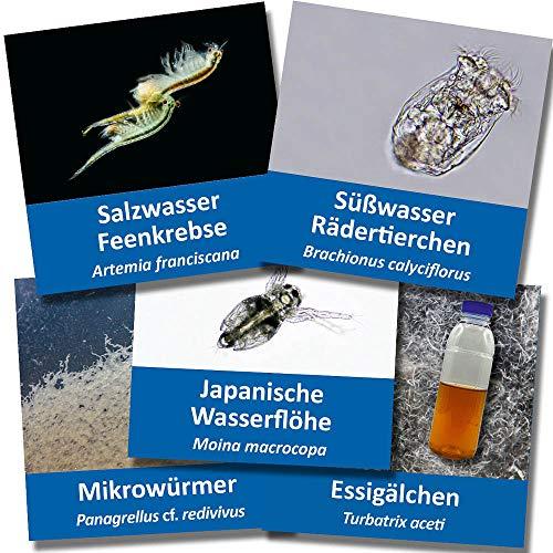 Großes Lebendfutter-Set (Artemia, Essigälchen, Mikrowürmer, Wasserflöhe und Rädertierchen) - Zuchtansätze mit Anleitung - Lebendfutter für Fische im Aquarium und auch für Jungfische geeignet