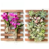 Wall Planters – 2 Pack Wooden Orchid Planter Frame Display, Hanging Wall Planters for Outdoor Plants, Air Plants Succulents Holders Hanger, Vertical Garden Plant Wall Decor, Macetas para Orquideas