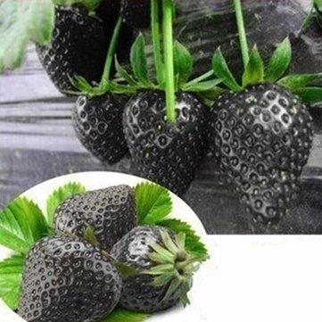 Schwarze erdbeere 20 samen (Strawberry Black)