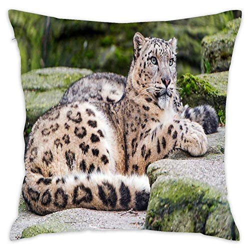 Snow Leopard Rest Stones Cotton Square Throw Pillow Cushion Sofa Home Decor Accent Pillowcase Slip Encasement 18x18 Inches