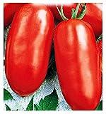 Semi Pomodoro San Marzano Gigante 2 Alto Solanum Lycopersicum Pomodori 300 C.ca Idea Regalo Natale Compleanno Festa