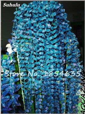 Rare Bonsai Fleur Graine jardin aérobie pot purifiant Air, décorations pour soirée de mariage ou cadeau d'anniversaire 30 Pcs 10