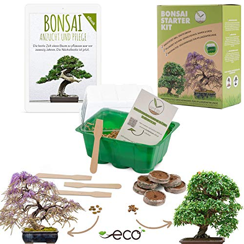 Bonsai Starter Kit Anzuchtset inkl. GRATIS eBook - Pflanzset aus Mini-Gewächshaus, Samen & Erde - nachhaltige Geschenkidee für Pflanzenfreunde (Samen: Afrikanischer Blauregen + Zwerg-Granatapfel)