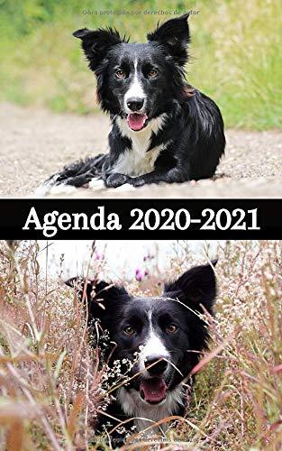 AGENDA 2020 2021 / 300 páginas / Portada : Perros BORDER...
