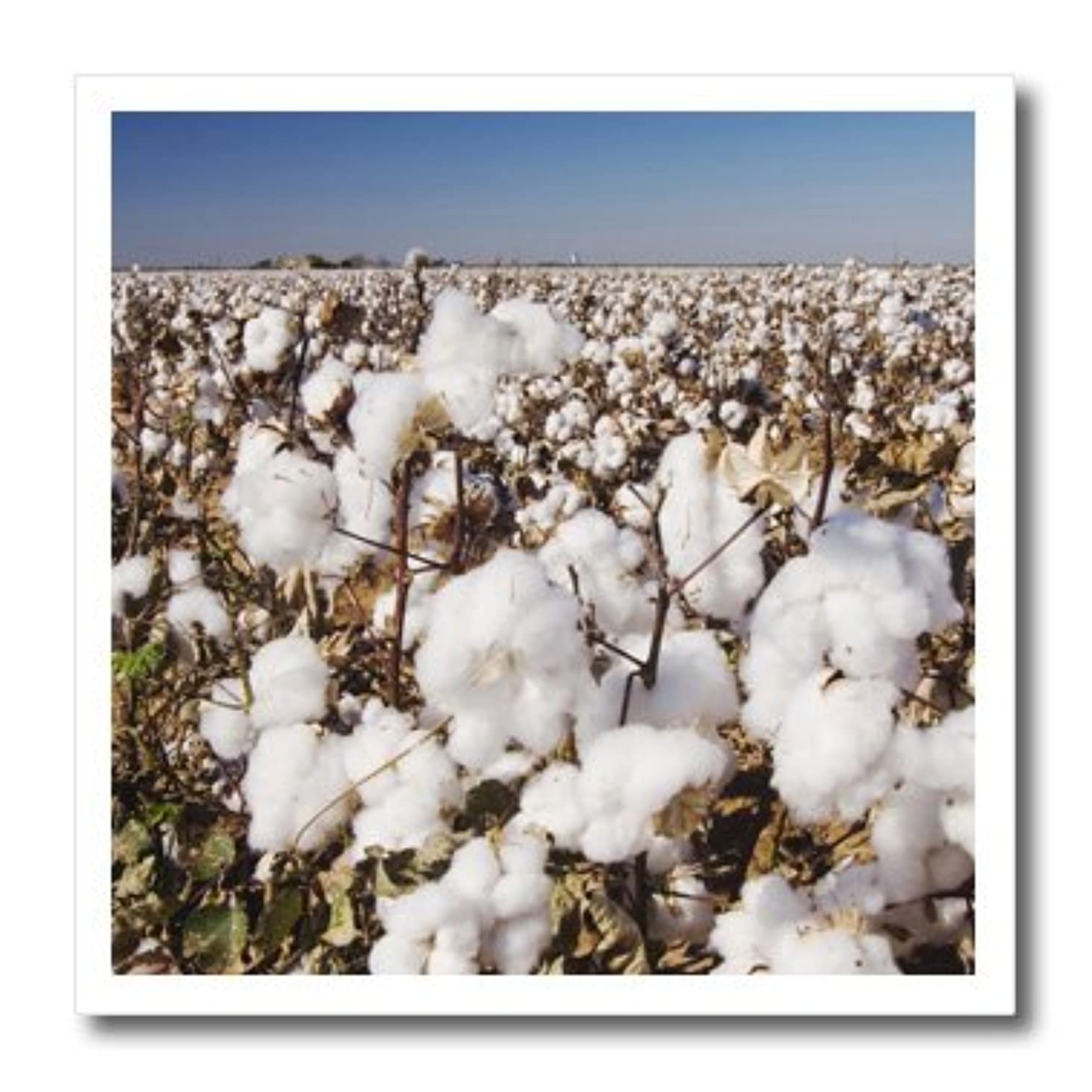 3dRose ht_84481_1 Cotton Plant, Agriculture, Lubbock, Texas-Rolf Nussbaumer-Iron on Heat Transfer for Material, 8 by 8-Inch, White irjmc988335