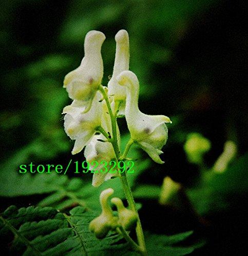 graines HOT Swan Fleurs 100PCS Caractéristiques chinoises graines Fleurs rares fleurs blanches Plantation d'expédition jardin gratuit