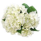 SODIAL Artificial Fleurs en Soie 7 Gros Bouquet D'Hortensia pour Mariage, Chambre, Maison, H?tel, Décoration De Fête Et Cadeau De Vacances Blanc