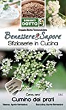 Sdd 14003361 Cumino Seme, Multicolore