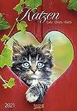Katzen - Kalender 2021 - Korsch-Verlag - Fotokalender mit bezaubernden Kätzchen und Platz zum Eintragen - Fotokunst - 24 cm x 34 cm