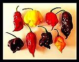 Chili - Surtido de afilado de diablo (7 variedades)