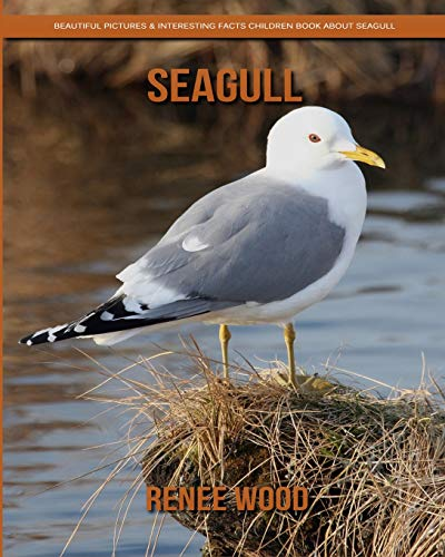 Seagull: Beautiful Pictures & Interesting Facts Children Book About Seagull