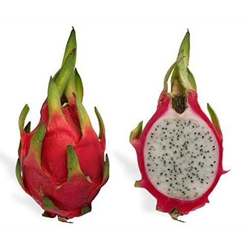 Bornbayb 100 pezzi White Dragon Fruit Seeds Semi di Hylocereus Pitaya