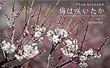 梅は咲いたか 1