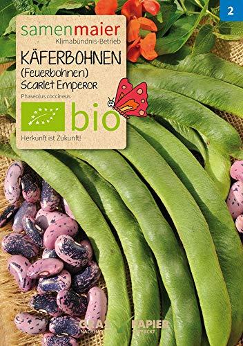 Samen Maier 937 Käferbohne Scarlet Emporer (Feuerbohnen) (Bio-Käferbohnensamen)