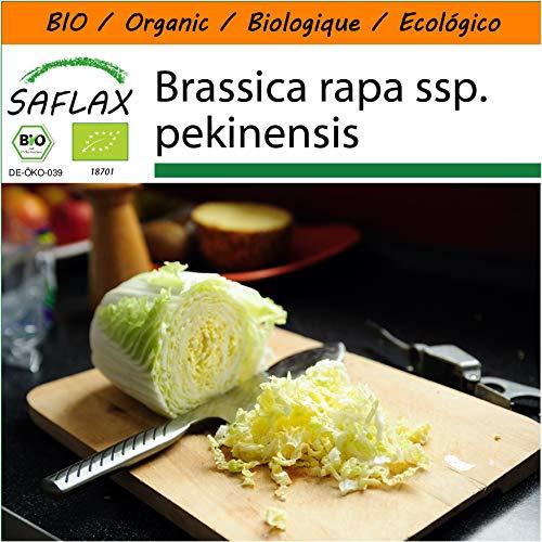 SAFLAX - Garden in the Bag - BIO - Chinakohl - Granat - 40 Samen - Mit Anzuchtsubstrat im praktischen, selbst aufstellenden Beutel - Brassica rapa