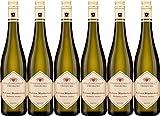 Staatsweingut Freiburg Professor Blankenhorn Weißwein VDP.GUTSWEIN 2019 Trocken (6 x 0.75 l)