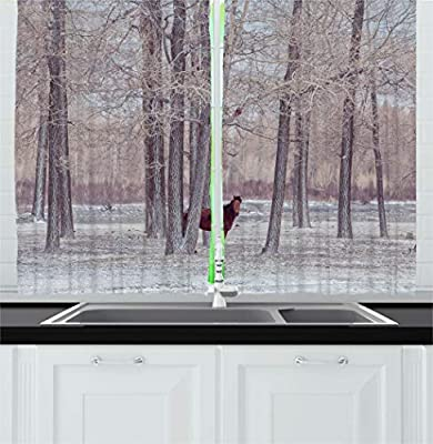 Ambesonne Multicolor Curtain Panels for Kitchen
