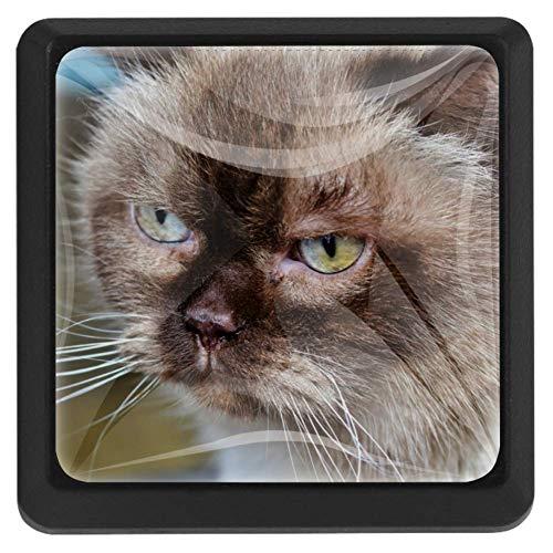 Kleine zwarte kat vierkante lade knoppen trekken handgrepen 3 Pack gebruikt voor keuken, dressoir, deur, kast Modern design 37x25x17mm/1.45x0.98x0.66in Breed Cat