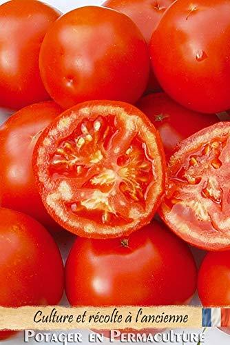 Portal Cool Tomate (Sibirien) (sibirisch) sehr früh. 15 Samen Organic Methode (Tomatensamen)