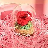 Hearkey Rosa Eterna Rojo Bajo la Campana De Vidrio, Flor de Rosa Natural Real con Caja, Rosa Estabilizada Barata, Buen Regalo para El Día de San Valentín, Cumpleaños, Navidad, Día de La Madre