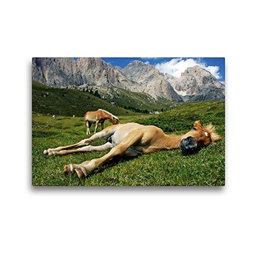 CALVENDO Premium Textil-Leinwand 45 x 30 cm Quer-Format Pferdehimmel, Leinwanddruck von Michael Rucker