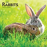 Rabbits 2020 12 x 12 Inch Monthly Square Wall Calendar, Domestic Pet Animals (English, French and Spanish Edition)