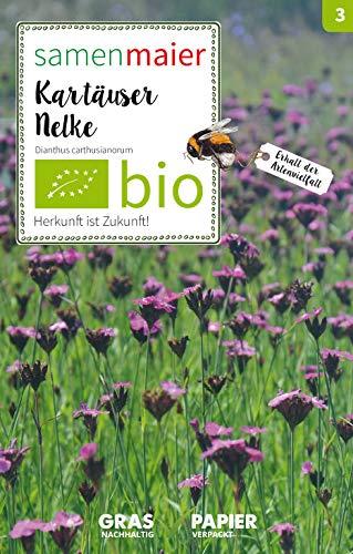 Samen Maier 3005 Karthäuser Nelke (Bio-Nelkensamen)