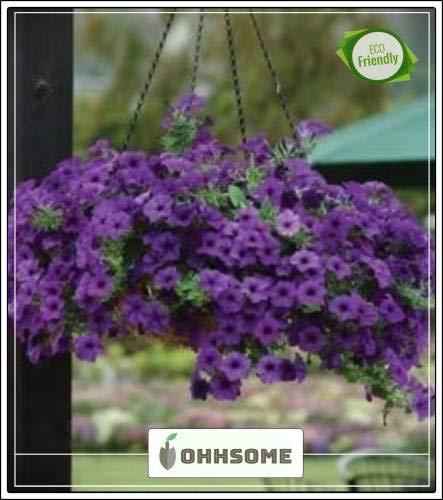 FERRY Hohe Wachstum Seeds Nicht NUR Pflanzen: Seed Teppich Spitze Hybrid Petunia Hybrida Seed Garden Seed (20 pro Paket)