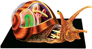 Assembly Snails Anatomy Skeleton Model Three-Dimensional Puzzle 4D Vision Animal Anatomy 32 Detachable Organs And Body Par...