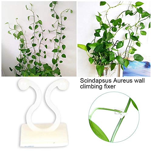 wangza 100pcs Pflanzen Unterstützung Clips Kletterhilfe Wand Indoor Fixierer Binding Clip Vine Garten Gemüse Nicht Markierender Selbstklebender Haken