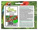 Stk - 20x Tomate Cerise - Alte Sorten Samen Salat