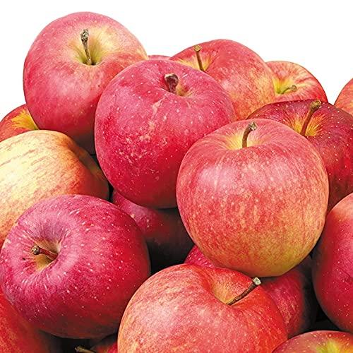 国華園 りんご 長野産 おまかせ赤りんご 10�s 1箱 食品