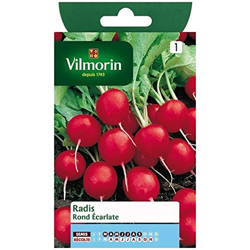 Vilmorin - Sachet graines Radis ronds écarlate