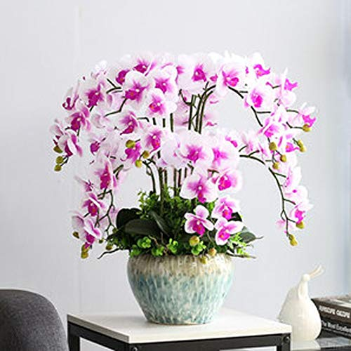 Seltene Phalaenopsis Orchidee Samen 100 Pcs, Bunt Mehrjährige Pflegeleicht Orchideen Phalaenopsis Pflanzen Vergossen Topfpflanze Bonsai Zierpflanzen Zierblumen Saatgut für Garten Balkon Dekor (6)
