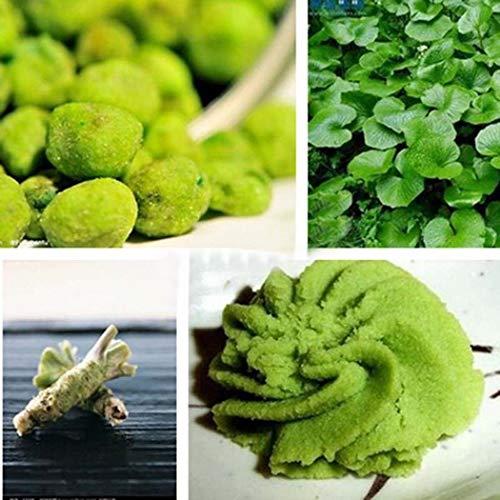 Tomasa Gartensamen- 100 stücke Wasabi Samen BIO Kräuterpflanze Wasabi Samen Japanischen Meerrettich Samen Seltener Gemüsesamen Garten