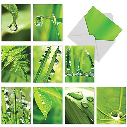 10 Assorted 'Just Dew It' Thank You Greeting Cards with Envelopes 4 x 5.12 inch, All Occasion Cards Featuring Sparkling Dew Drops on Grass, Say Thanks on Weddings, Birthdays, Thanksgiving M3015