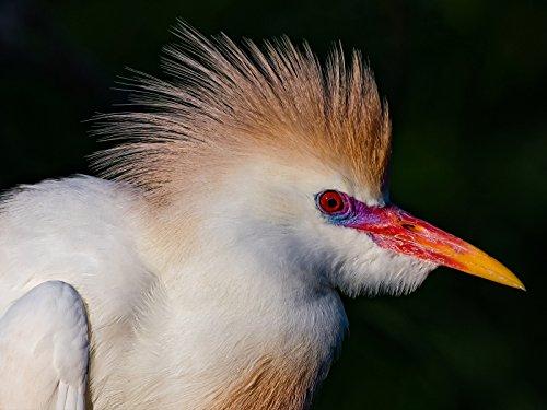 Gatorland Photographer's Pass Bird Rookery Nikon D500 Nikkor 200-500mm