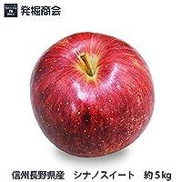 信州 長野県産 シナノスイート 約5kg 2020年収穫 りんご 期間限定 特殊保存