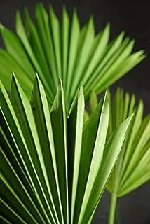 Richland Natural Palm Leaf Fans Leaves Set of 5