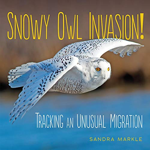 Snowy Owl Invasion! cover art