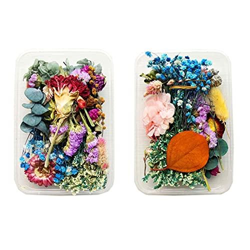 2 Cajas Flores Secas Naturales Mezcladas, Decoración Flores Prensadas Mezcladas, Mezcladas Flores...