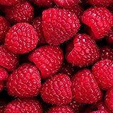50 Unids/Bolsa Semillas De Frambuesa Deliciosas Semillas De Frutas De Bayas Rojas Sin OGM Para Semillas De Jardín De Plantas De Granja Semillas de frambuesa roja